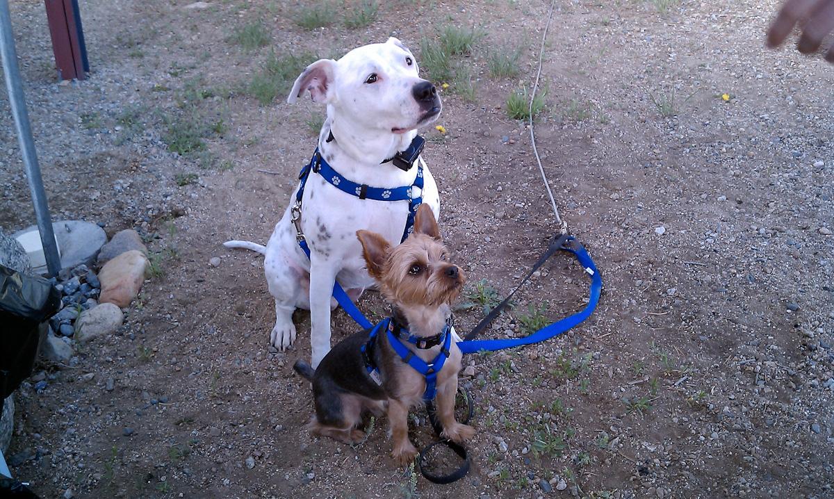 Roxie & Sam